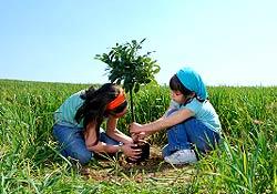 L'intelligence écologique, nouvelle responsabilité et ressource de l'entreprise